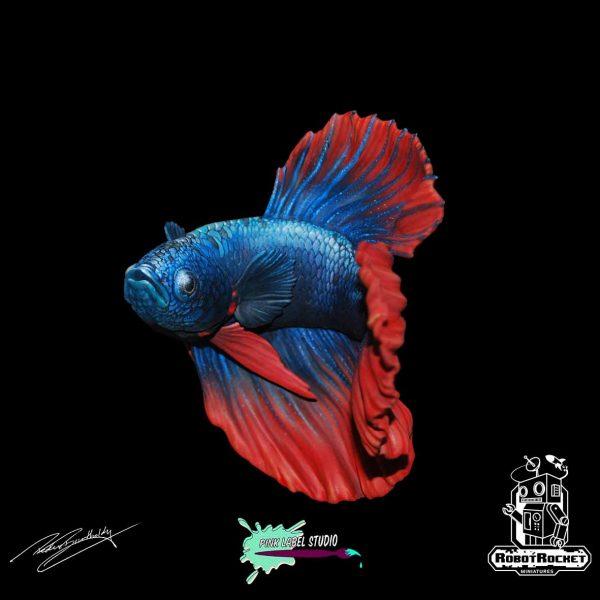 Betta fish WS